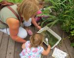 Pond dipping 5